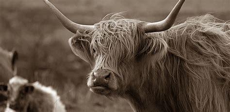 Tshirt Macbeth Wildcats pin scottish highlander costume maskworldcom on