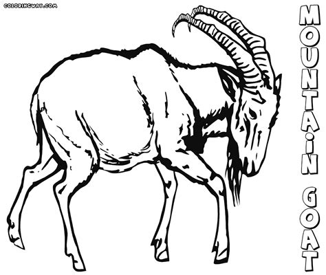 coloring pages mountain goat mountain goat standing tall coloring pages coloring