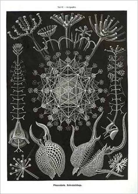 libro art forms in the libro art forms in nature the prints of ernst haeckel di ernst haeckel