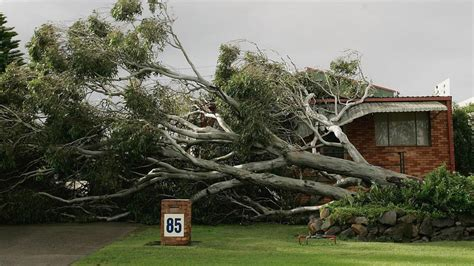 neighbour s tree fell on if your neighbor s tree falls in your yard who pays for cleanup tulsa s 24 hour