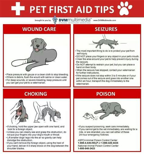 25 best ideas about veterinary medicine on veterinary technician veterinary