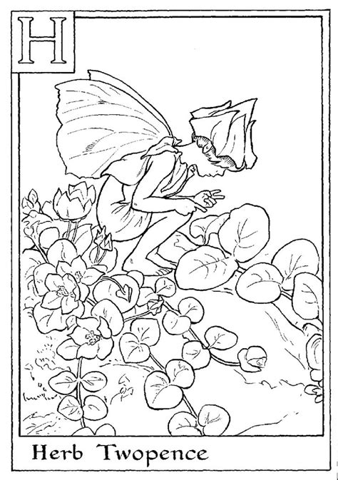 fairies in bloom a flower coloring book books 25 best ideas about coloring pages on