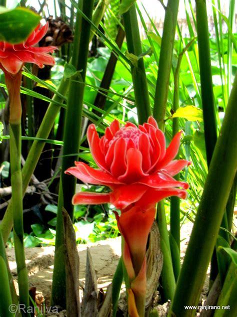 Joli Nom De Fleur by Fleurs Exotiques Noms