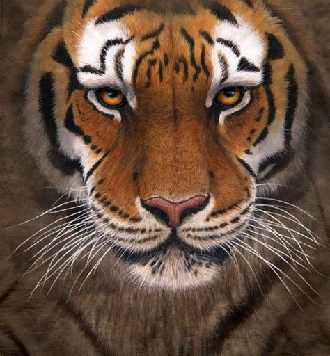google images tiger tiger warrior pics google search tiger warrior
