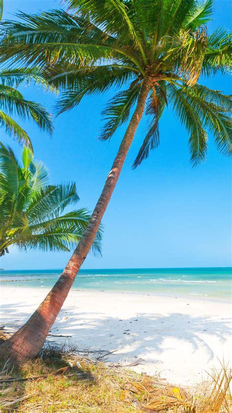 wallpaper summer beach palm trees sea 3840x2160 uhd 4k
