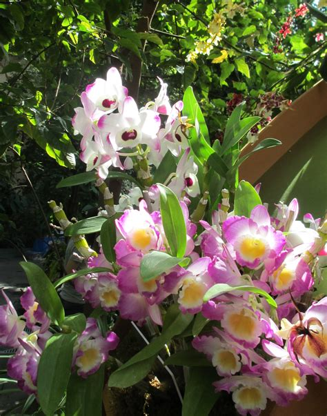 orchid facts 10 facts about orchids kite dreams