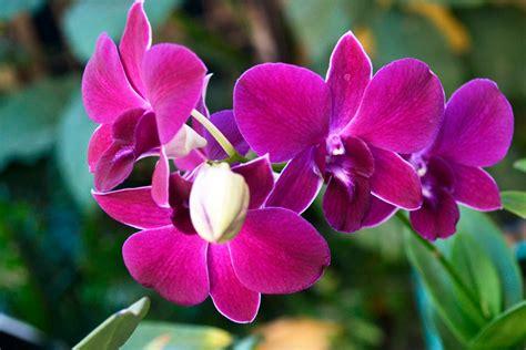 merawat  memelihara tanaman hias anggrek tanaman
