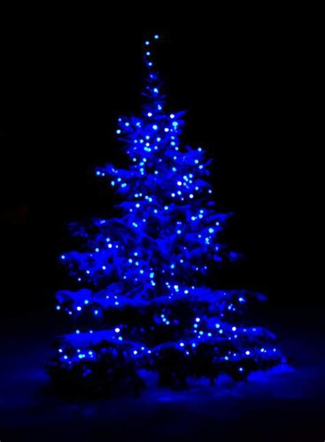 blue lights tree 25 best ideas about blue lights on