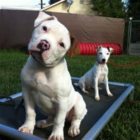 kennel for sale craigslist pets for sale oahu craigslist