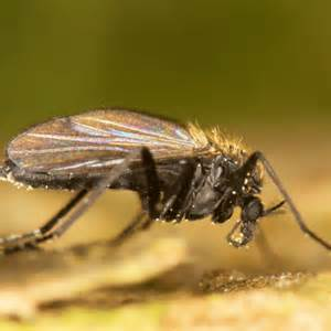 Gnats In Backyard How To Get Rid Of Gnats In Your Home How To Get Rid Of Stuff