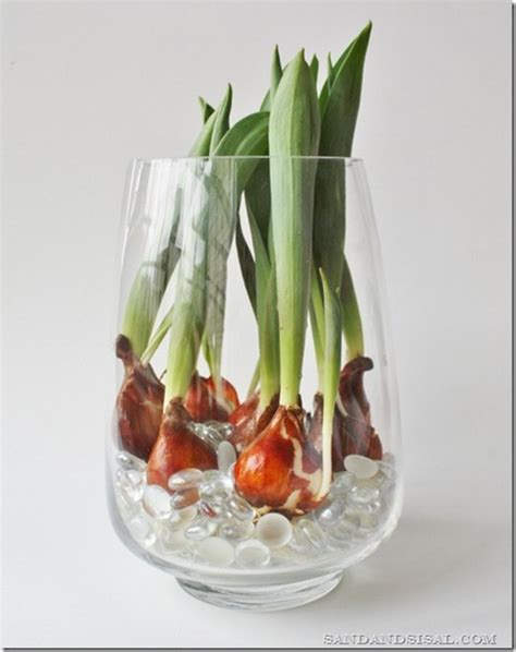 piantare tulipani in vaso come far crescere i tulipani in un vaso con acqua