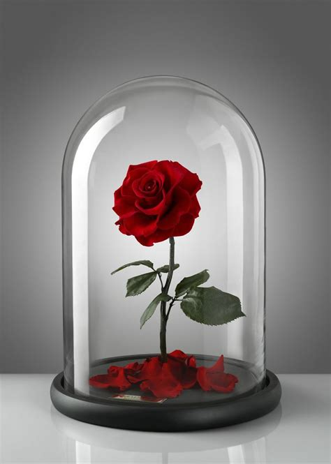 forever rose in glass real beauty and the beast roses exist and they ll last