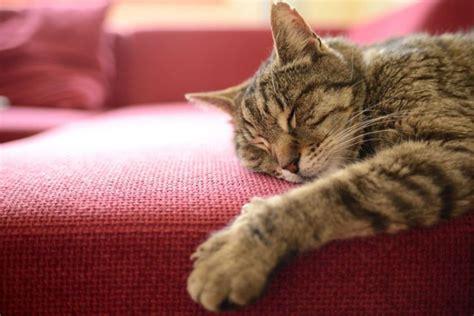 Wanita Jepang Menyusui Hewan Akibat Digigit Kucing Liar Seorang Wanita Jepang