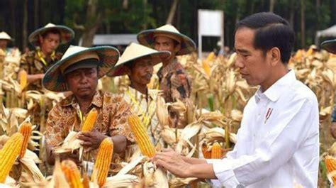 Harga Jagung Pakan Ternak Per Kg ekonom impor jagung untuk turunkan harga daging ayam