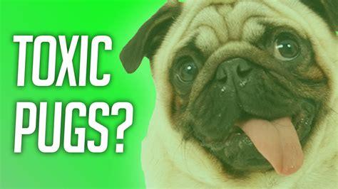 overwatch pugs overwatch toxic pugs