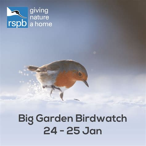 Rspb Great Garden Birdwatch Results Are In by The Rspb Big Garden Birdwatch