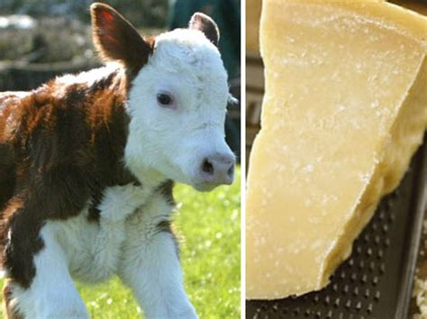 Cheese Calf Starbucks Crushed Beetles Just The Tip Of The Iceberg