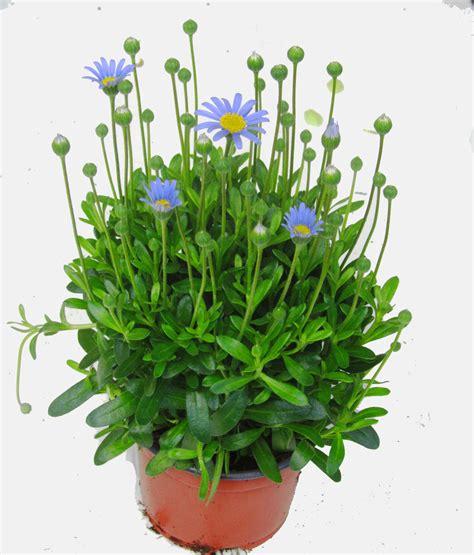 pflanzen shop pflanzen shop pflanzen shop pflanzen