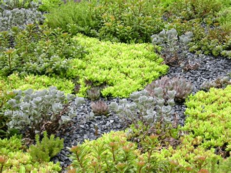 rooftop plants green roof plants emory knoll farms archives greenroofs com sky gardens blog