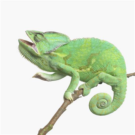 Home Design Decorating Games types of chameleons choosing a pet chameleon