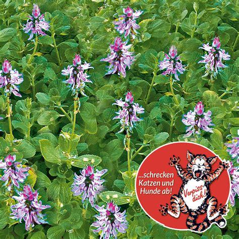 Verpiss Dich Pflanze Kaufen 3259 by Verpiss Dich 174 Pflanze Gr 252 Nes Laub Kaufen Bei