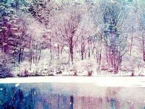 forest frozen lake nature new year outdoor image