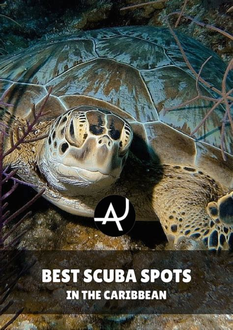 top 10 best scuba diving in the caribbean the adventure