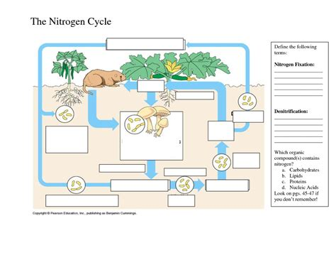 The Nitrogen Cycle Worksheet Answers by Nitrogen Cycle Diagram Worksheet Lesupercoin Printables
