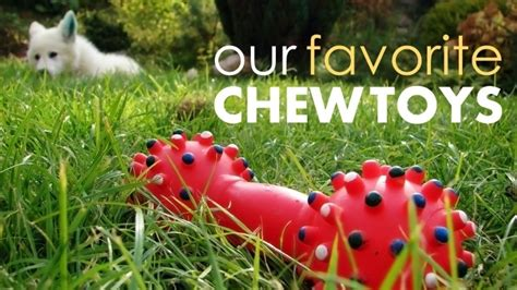 what are the best chew toys for puppies best chew toys for dogs and the ones to avoid herepup