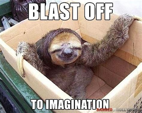 Funny Sloths Memes - the best of sloth memes 16 pics