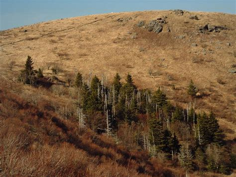 Black Balsam Knob To Cold Mountain by Loeb Section 3 Trail On Hikewnc