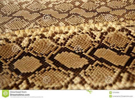 brown pattern snake background snake skin pattern brown stock image image