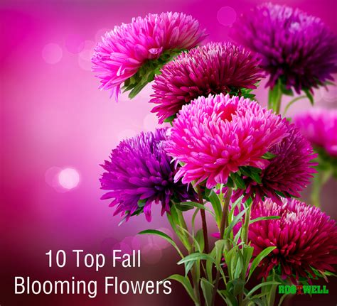 flowers that bloom in fall 10 top fall blooming flowers