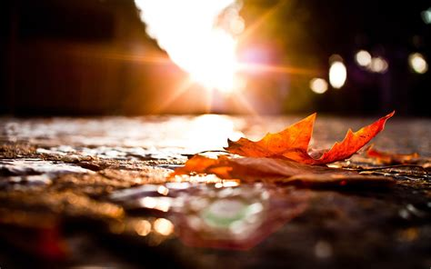 leaves photography macro fall sunset wallpapers hd