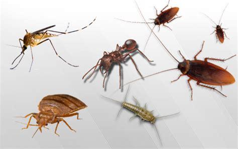 house pest pest mortem india pvt ltd