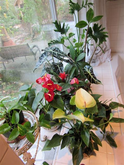 images  extraordinary house plants