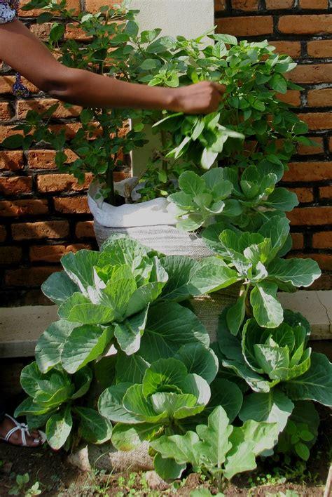 Grow your own sack garden   Humanitarian Aid & Relief