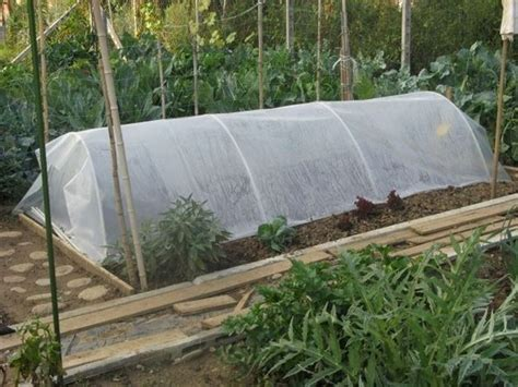 serre da giardino fai da te serre fai da te ortaggi costruire una serra fai da te