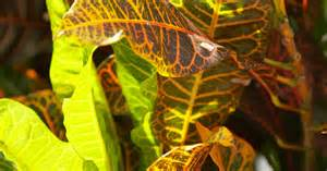 artificial light vs light for plant growth ehow uk