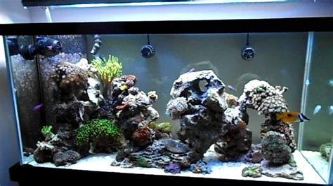 reef aquascape aquascaping in my 90g reef youtube