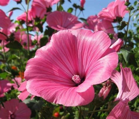 Sepatu Cantik Flowers Ikido daftar nama bunga lengkap beserta gambar dan penjelasannya bibitbunga