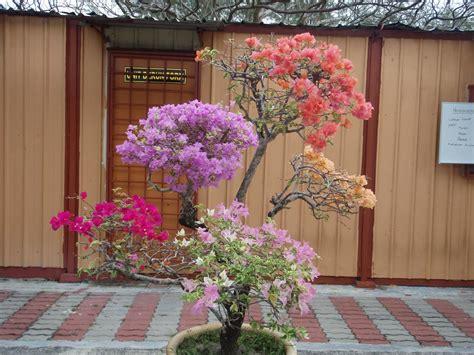 tema tumbuh tumbuhan bunga jenis jenis bunga