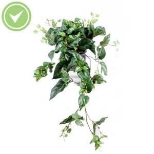 Impressionnant Plante Verte Retombante D Interieur #4: pothos155.jpg
