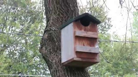 eastern screech owl house    awesome youtube