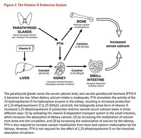 Vitamin Albumin vitamin d linus pauling institute oregon state