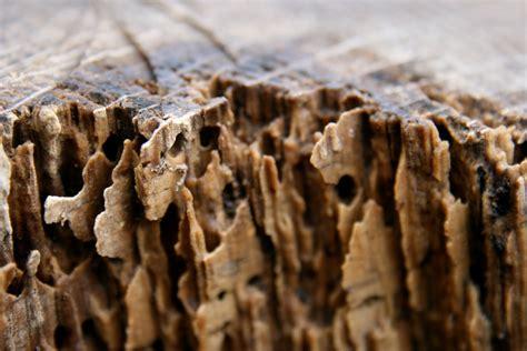 Comment Savoir Si On A Des Termites 1963 comment savoir si on a des termites traitement des
