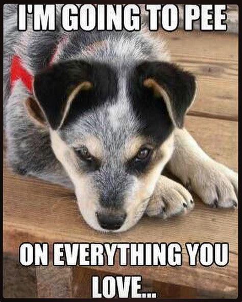 dog repellent  furniture dog pee diy dog