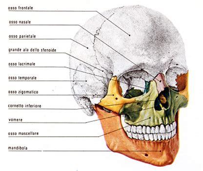 mal di testa occhio destro mal di testa tempia destra 28 images mal di testa lato