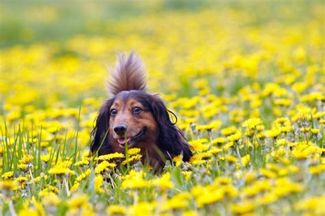 how to help allergies how to help your survive allergy season pet community center