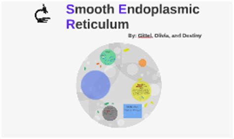 Smooth Endoplasmic Carcinogenic Detox by Smooth Endoplasmic Reticulum By Gittel Halikman On Prezi